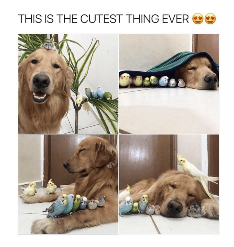 meme - Dog - THIS IS THE CUTEST THING EVER