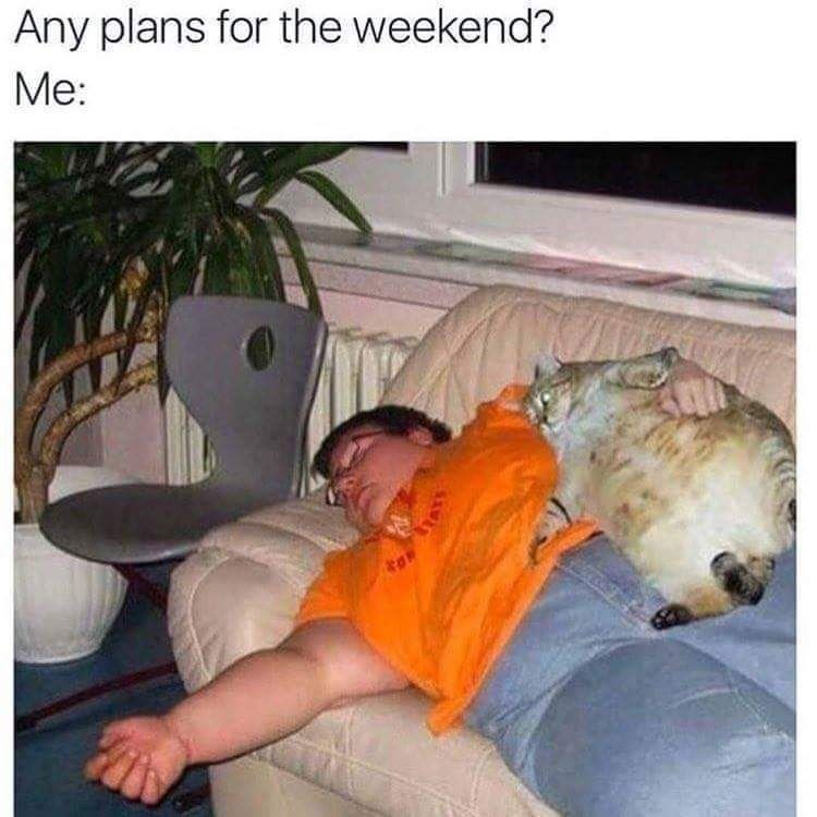 meme - Nap - Any plans for the weekend? Me: