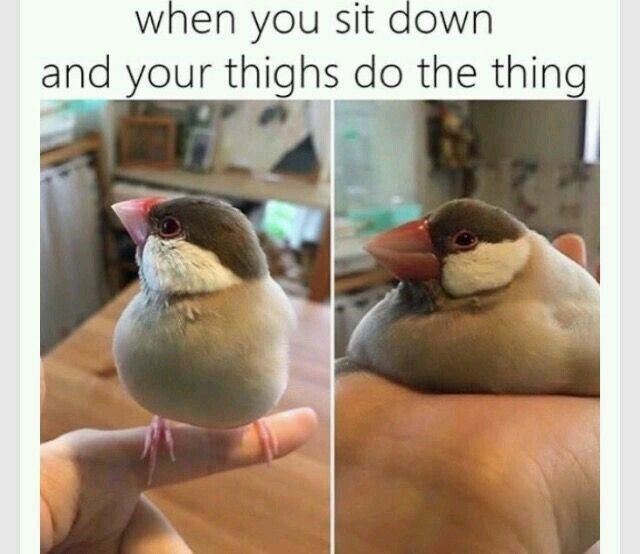 meme - Bird - when you sit down and your thighs do the thing