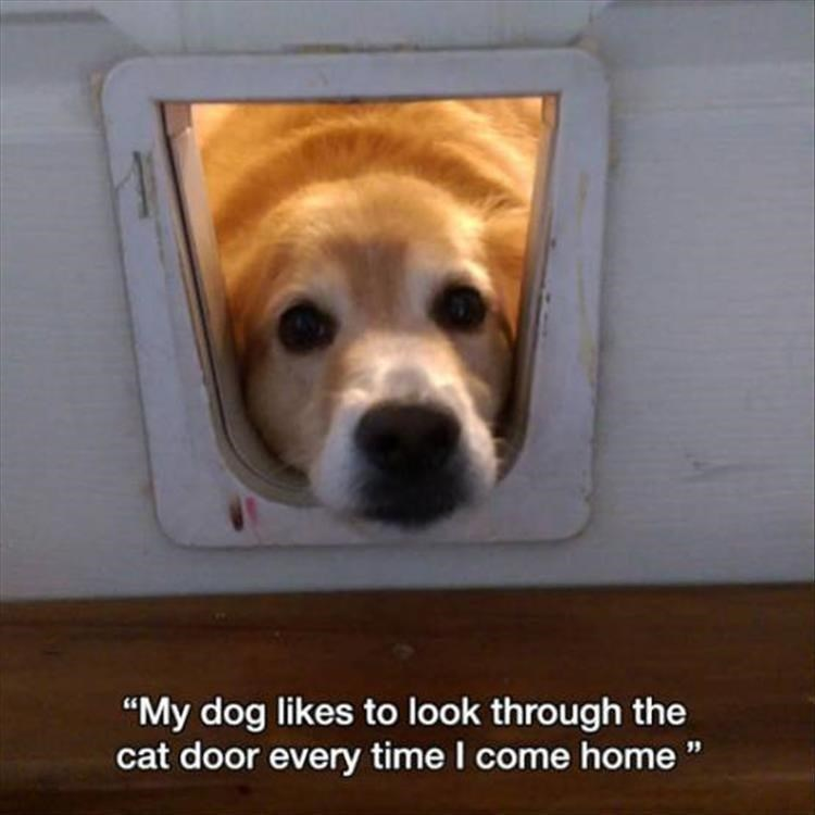 "Dog - ""My dog likes to look through the cat door every time I come home"