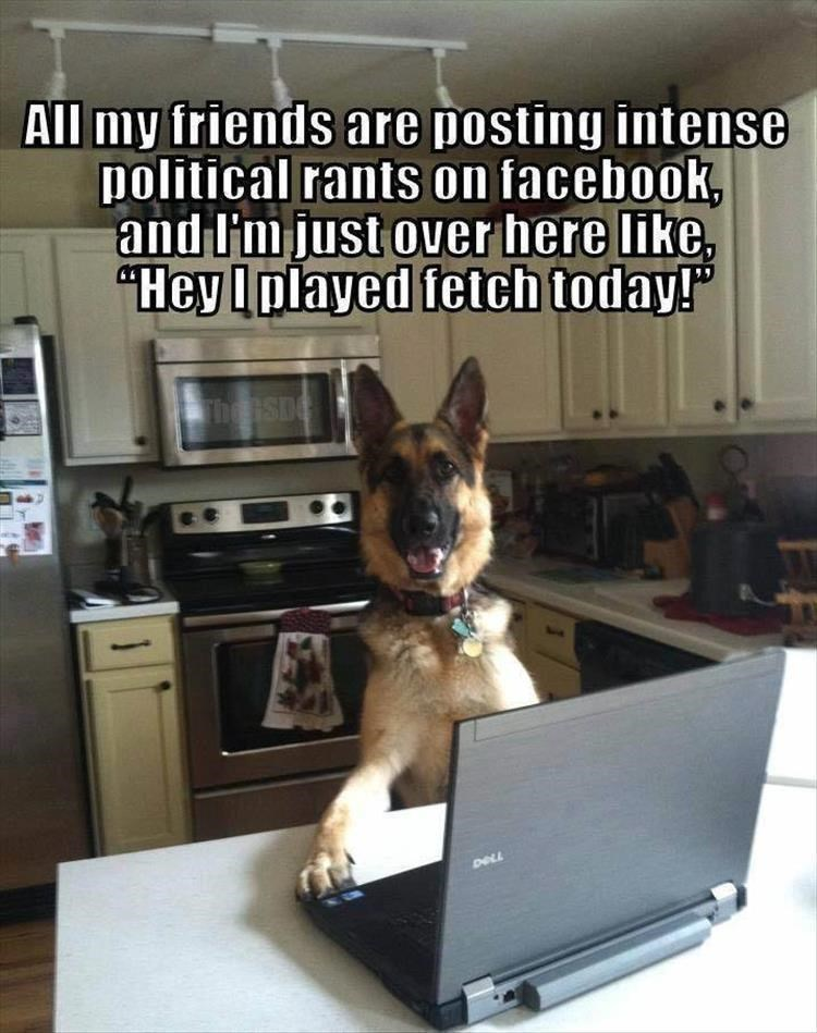 """Canidae - All my friends are posting intense political rants on facebook, and l'm just over here like """"Hey Iolayed fetch today!"""" The SD DELL"""