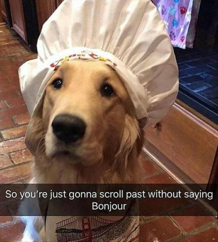 Dog - So you're just gonna scroll past without saying Bonjour