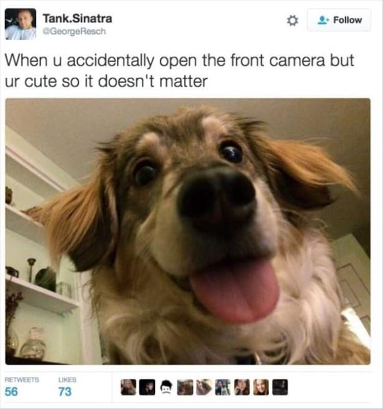 Dog - Tank.Sinatra GeorgeResch Follow When u accidentally open the front camera but ur cute so it doesn't matter RETWEETS LIKES 56 73