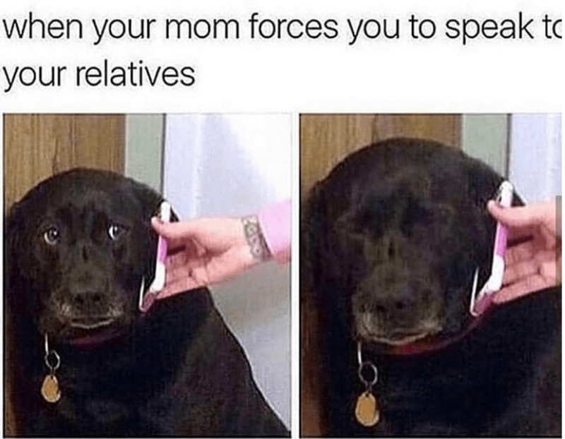 Dog breed - when your mom forces you to speak to your relatives