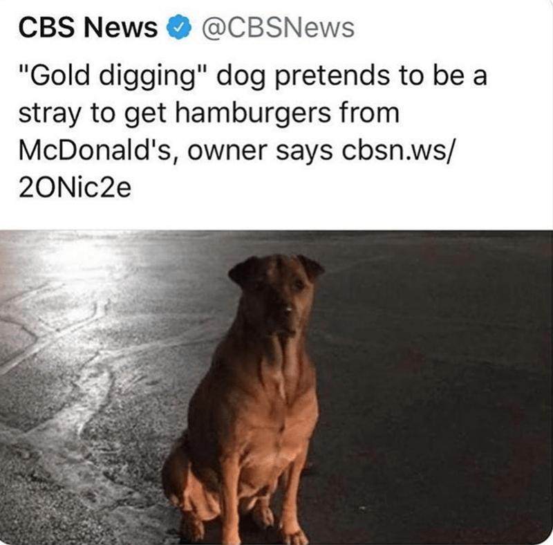 Cheezburger Image 9260003328