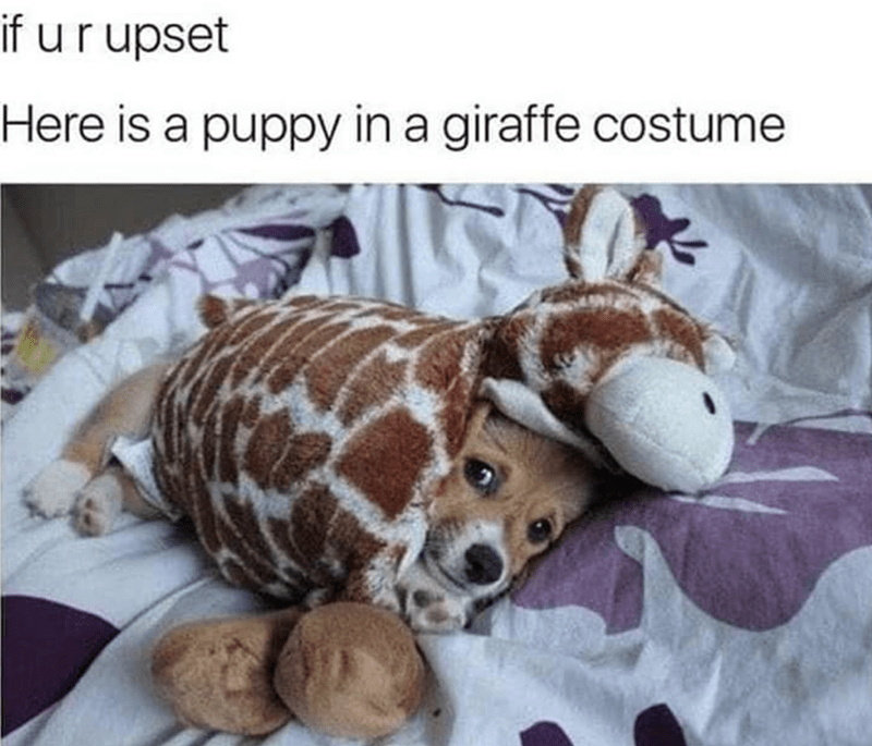 Stuffed toy - if ur upset Here is a puppy in a giraffe costume