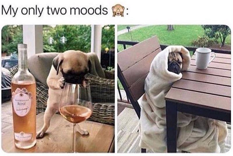 Companion dog - My only two moods ROST