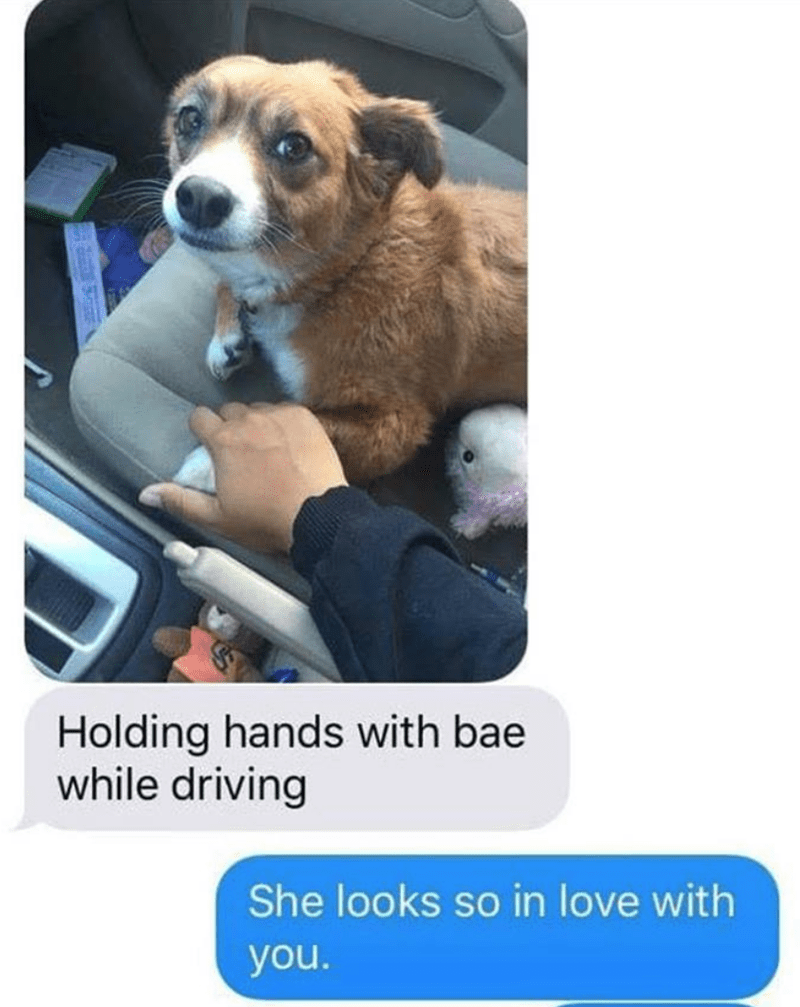 Dog - Holding hands with bae while driving She looks so in love with you.