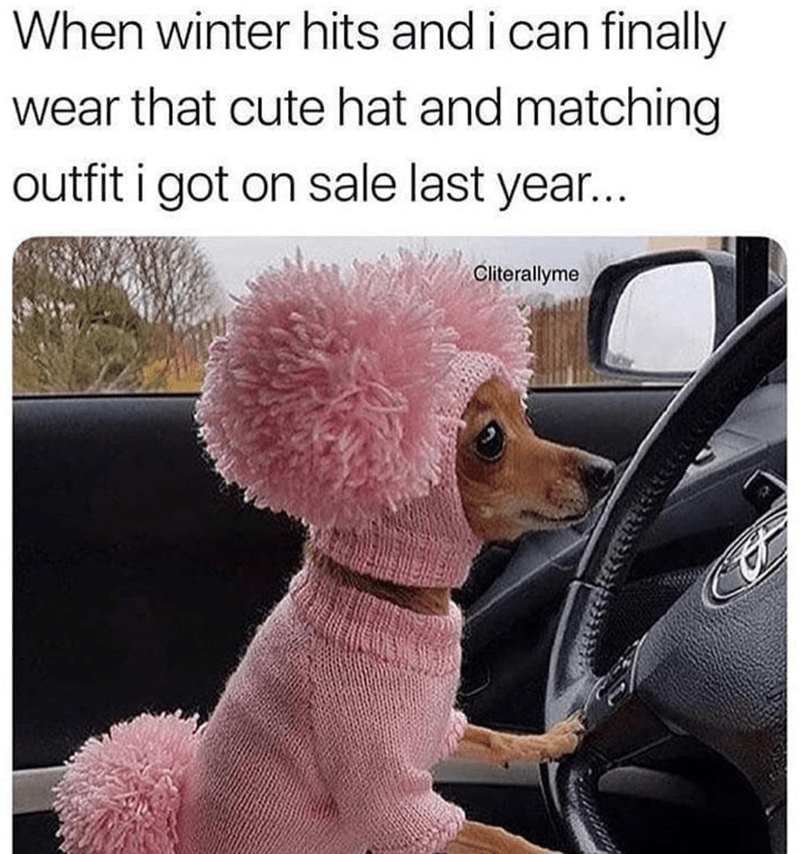 Dog - When winter hits and i can finally wear that cute hat and matching outfit i got on sale last year... Cliterallyme