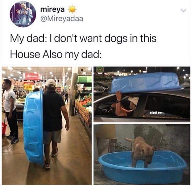 Adaptation - mireya @Mireyadaa My dad: I don't want dogs in this House Also my dad: