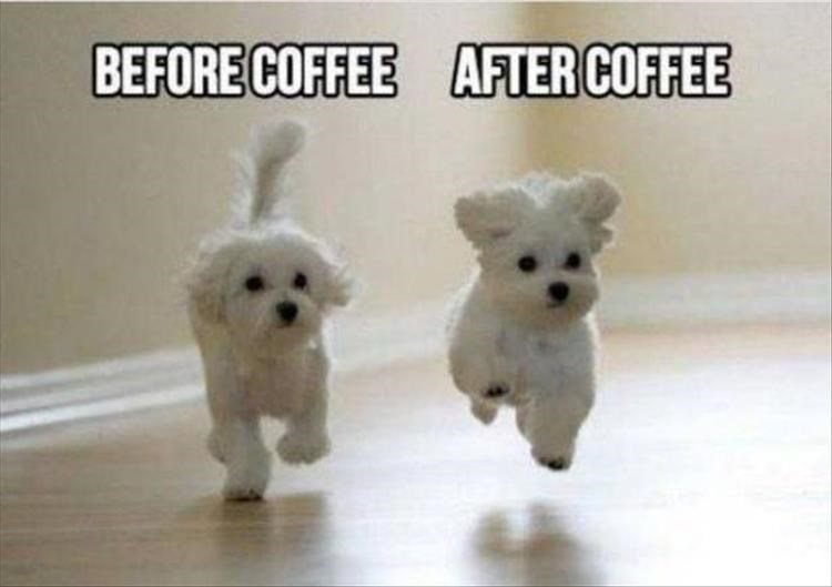 Dog - BEFORE COFFEE AFTER COFFEE