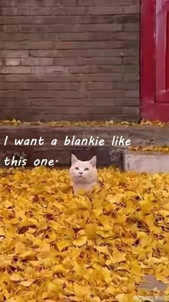 cute cat covered in a pile of leafs