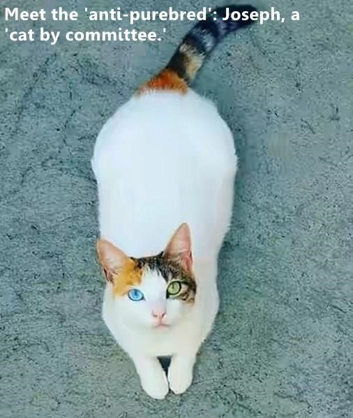 cute cat with two different colored eyes staring into the camera
