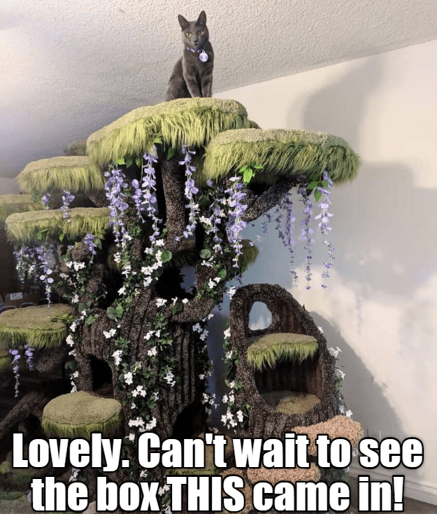cute cat meme standing on top of a cat tower that resembles a tree