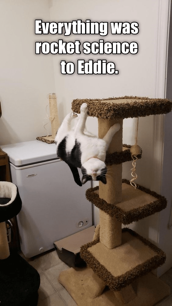cute cat hanging upside down from a cat tower