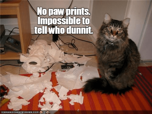 cute cat meme next to a pile of torn up papertowel