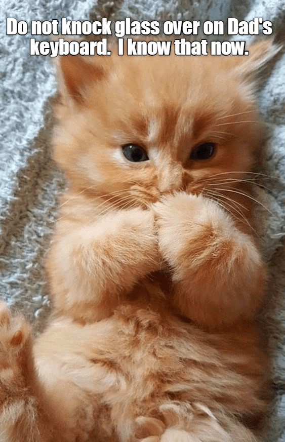 cute cat meme of a kitten laying on its back with its paws near its mouth