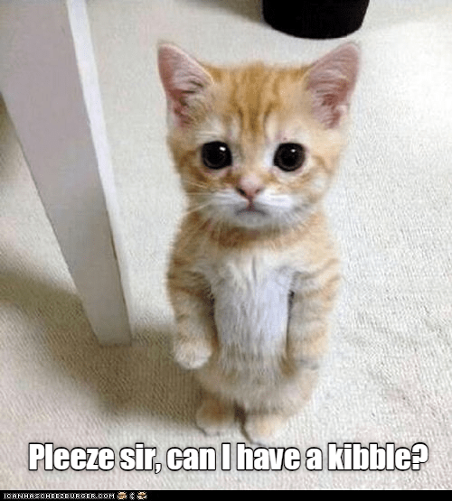 caturday meme of a kitten standing on its back legs with one paw out