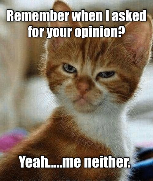 cute cat caturday meme making a mad face