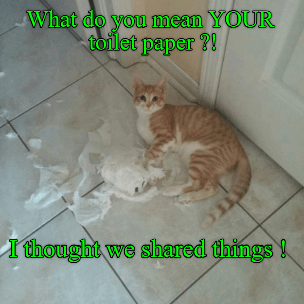 cute cat meme of a cat that ripped up toilet paper and gets caught by its owner