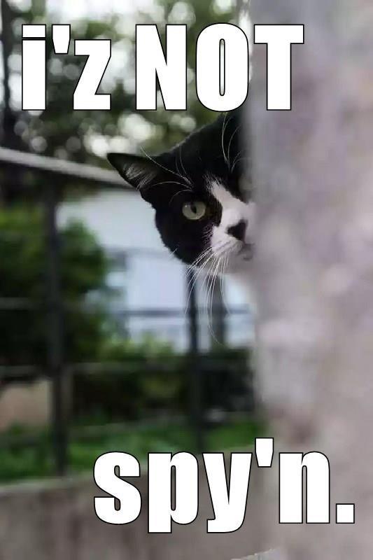 caturday meme of a cat peeking its head behind a wall