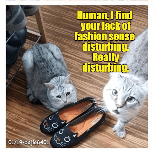 cute cats playing with their owners shoes that has cats on it