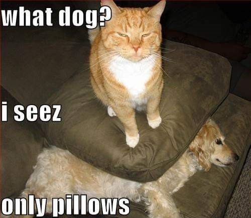 cat meme - Cat - what dog? i seez only pillows