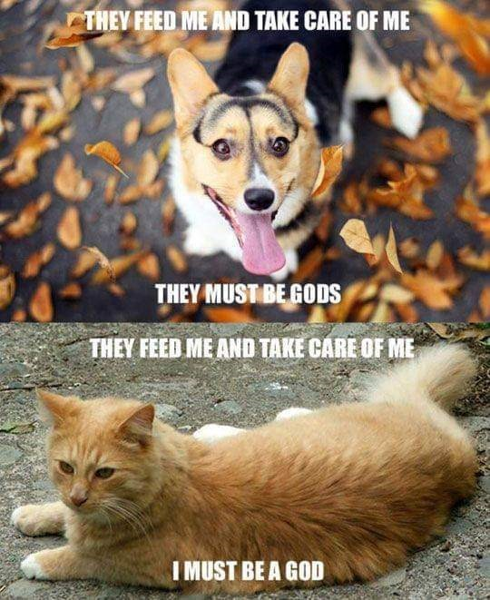 cat meme - Pembroke welsh corgi - THEY FEED ME AND TAKE CARE OF ME THEY MUST BEGODS THEY FEED ME AND TAKE CARE OF ME I MUST BE A GOD