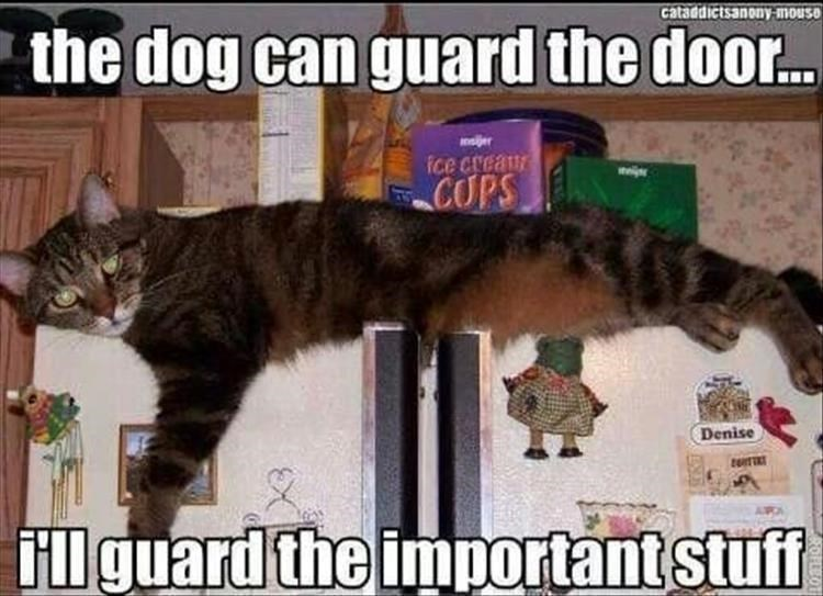 cat meme - Cat - cataddictsanony-mouse the dog can guard the doo... oijer Ice creaur COPS Denise illguard the importantstuff