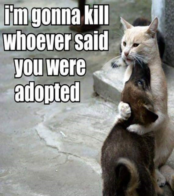 cat meme - Cat - i'mgonna kill whoever said you were adopted