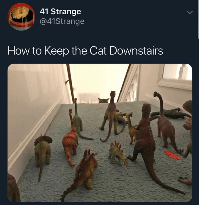 cat meme - Human - 41 Strange @41Strange How to Keep the Cat Downstairs