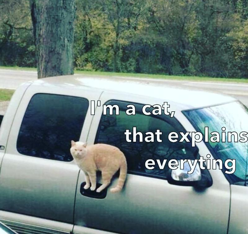 cat meme - Motor vehicle - T'm a cat, that explains everyting