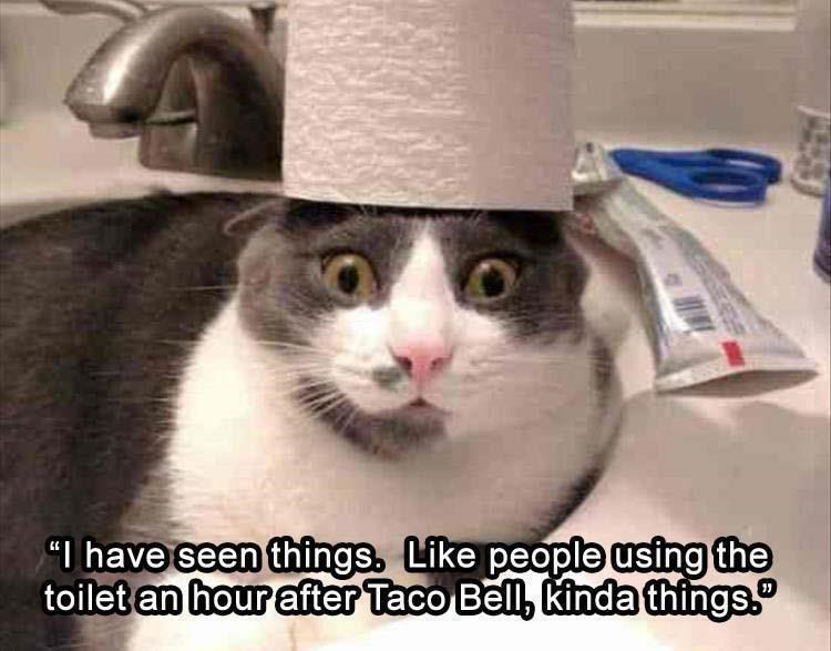 "cat meme - Cat - ""I have seen things, Like people using the toilet an hour after Taco Bell, kinda things."