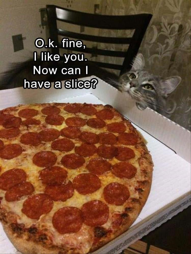 cat meme - Pizza - O.k. fine, like you. Now can I have a slice?