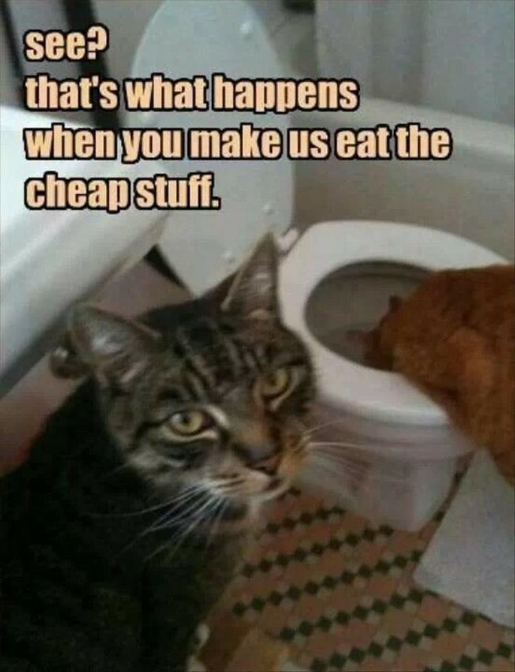 cat meme - Cat - see? that's what happens when you make us eat the cheapstuff.