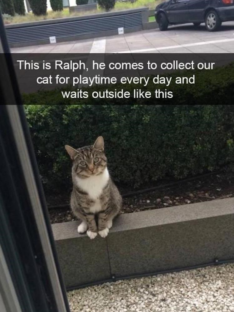 cat meme - Cat - This is Ralph, he comes to collect our cat for playtime every day and waits outside like this