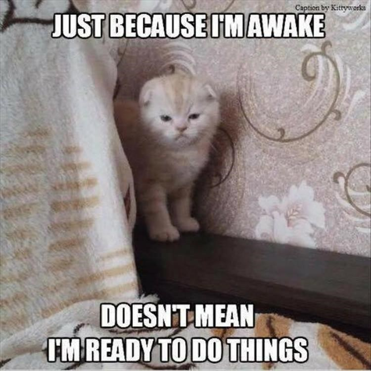 cat meme - Cat - Caption by Kittyworks JUST BECAUSE ITMAWAKE DOESNT MEAN MREADY TO DOTHINGS