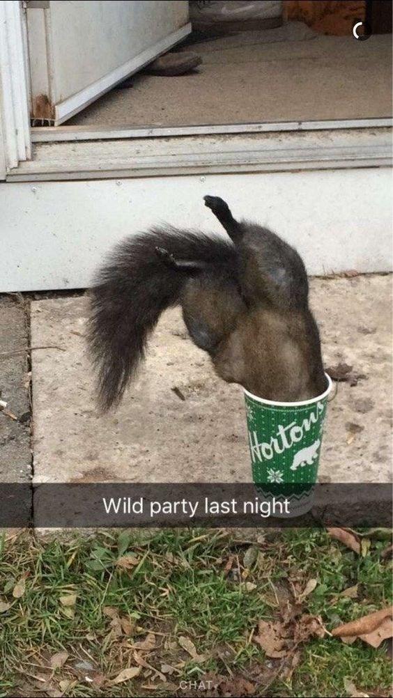 Goats - Hoiton Wild party last night
