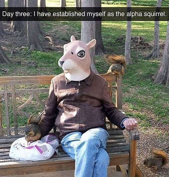 Animation - Day three: I have established myself as the alpha squirrel. N