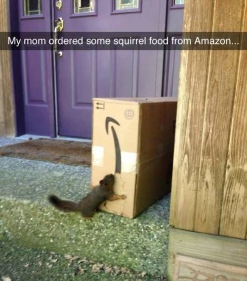Cat - My mom ordered some squirrel food from Amazon...