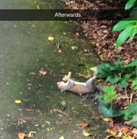 Nature - Afterwards.