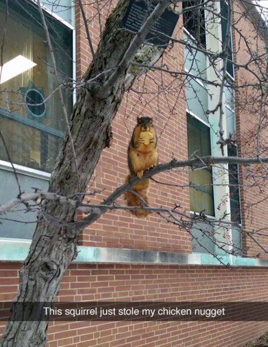 Branch - This squirrel just stole my chicken nugget
