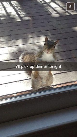 Squirrel - ill pick up dinner tonight
