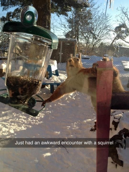 Just had an awkward encounter with a squirrel