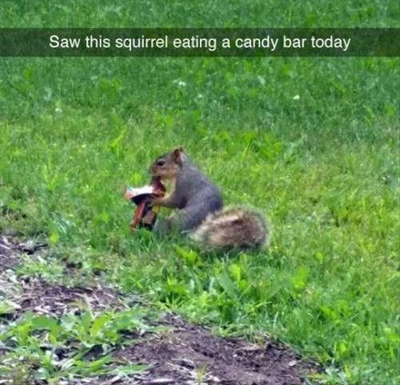 Wildlife - Saw this squirrel eating a candy bar today