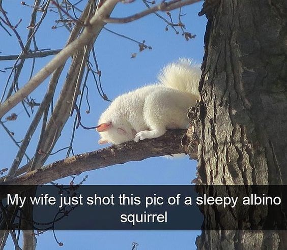 Adaptation - My wife just shot this pic of a sleepy albino squirrel