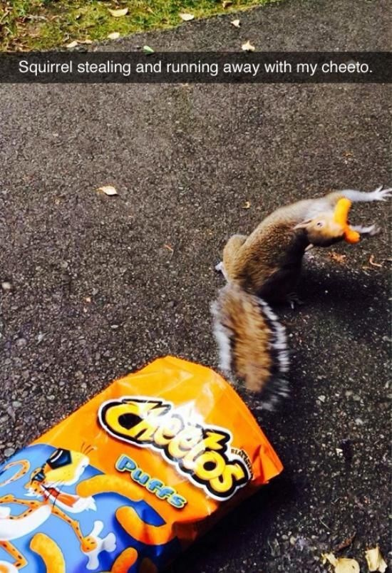 Squirrel - Squirrel stealing and running away with my cheeto. deeos Purrs