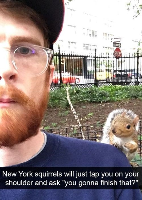 "Selfie - New York squirrels will just tap you on your shoulder and ask ""you gonna finish that?"""