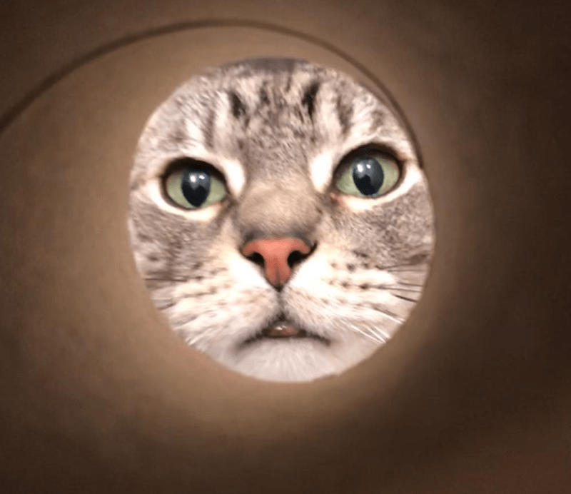 moon selfie - Cat