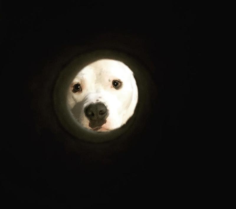 moon selfie - Canidae